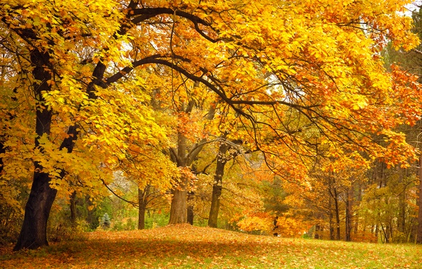 Picture autumn, forest, leaves, trees, landscape, branches, nature, Park, glade, yellow