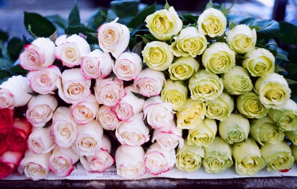 Picture flowers, roses, a lot