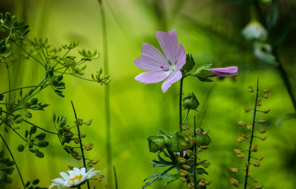 Picture forest, flower, macro, petals, Daisy