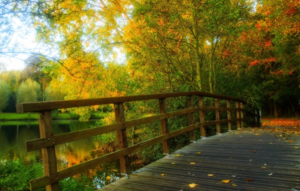 Picture autumn, forest, leaves, water, trees, bridge, nature, Park, river, view, hdr, walk, forest, alley, river, …