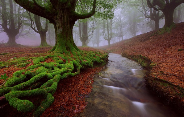 Picture summer, trees, river, stream, moss, Spain, Beech, Biscay, Alava, Basque country