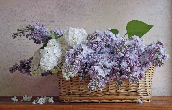 Picture basket, still life, gently, lilac