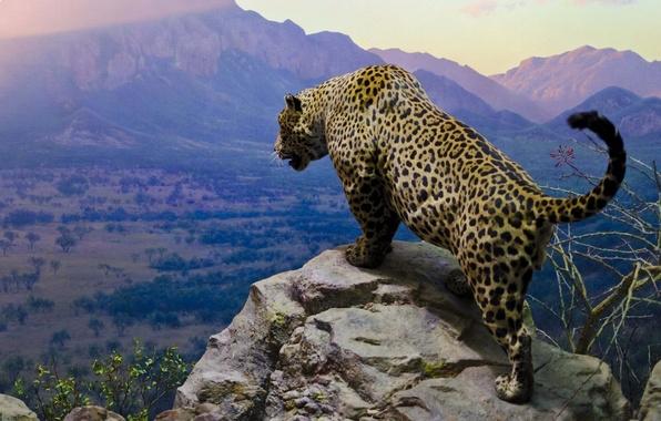Picture sky, jaguar, cats, moutains