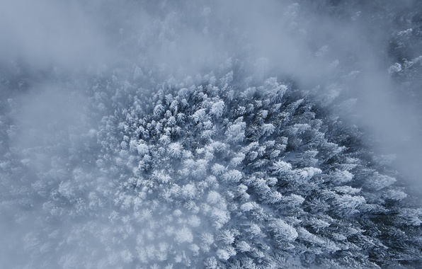 Picture winter, forest, snow, the view from the top, trees.fog