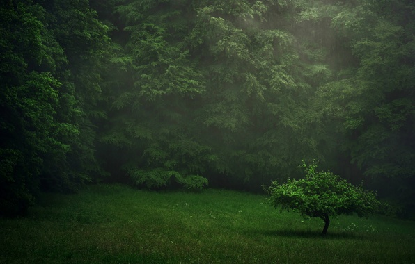 Picture greens, forest, summer, rain, lawn, tree