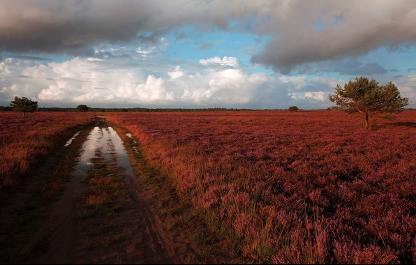 Picture road, puddle, after the rain, Heath, Heather