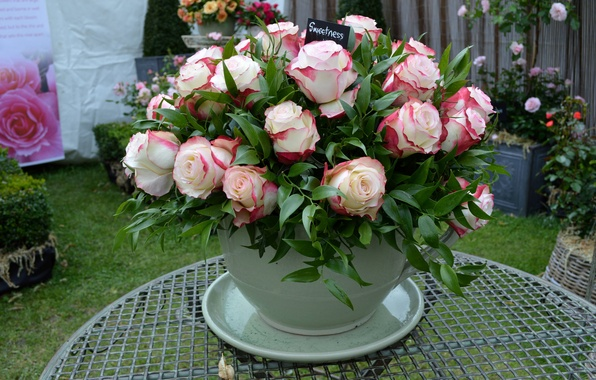 Picture flowers, roses, bouquet, Cup, rose, flowers, Cup, bouquet
