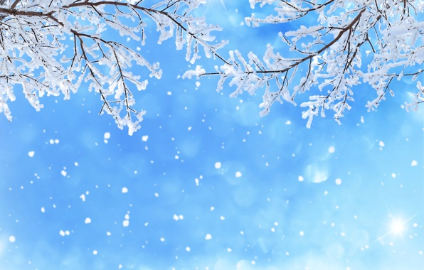 Picture winter, the sky, snow, snowflakes, branches, glare, blue