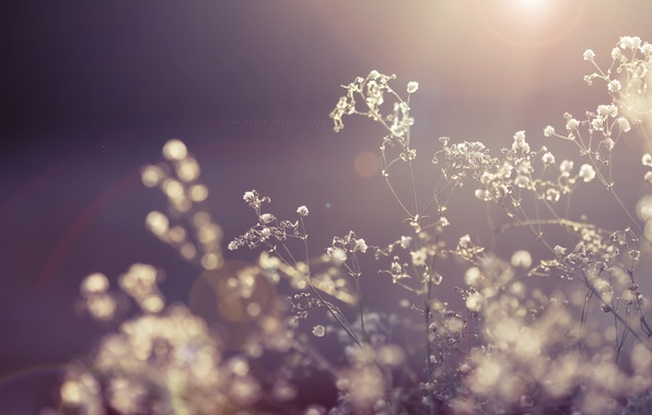 Picture the sun, macro, rays, light, flowers, nature, plant, dry, the dried flowers