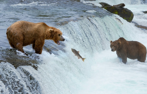 Picture river, animals, waterfall, fish, bears, hunting