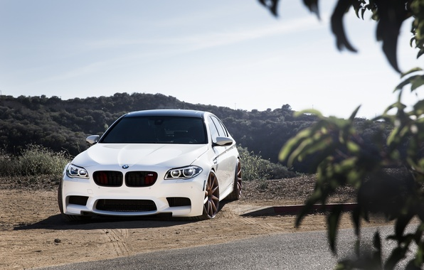Picture white, leaves, bmw, BMW, white, front view, f10