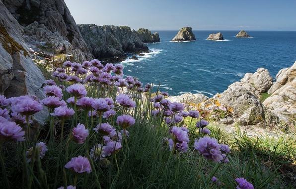 Picture sea, flowers, rocks, shore