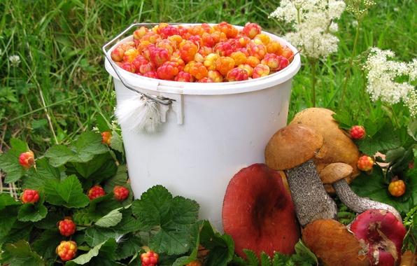 Picture summer, berries, mushrooms, harvest, cloudberry, boletus, Russula
