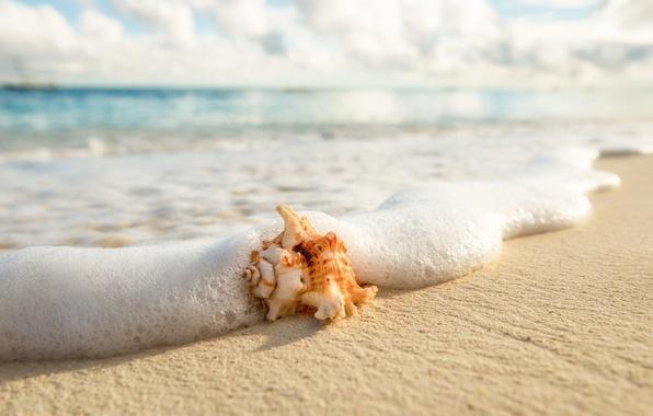 Picture sea, beach, summer, foam, macro, shell