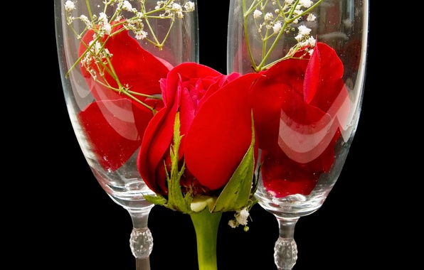 Picture flower, flowers, nature, glass, rose, petals, Bud, glasses, red, red roses