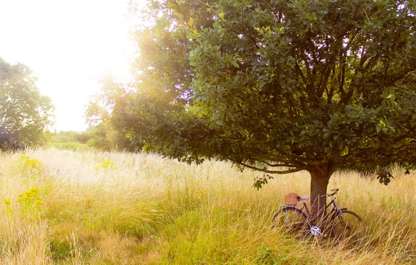 Picture summer, grass, trees, nature, bike, tree, glade, plants