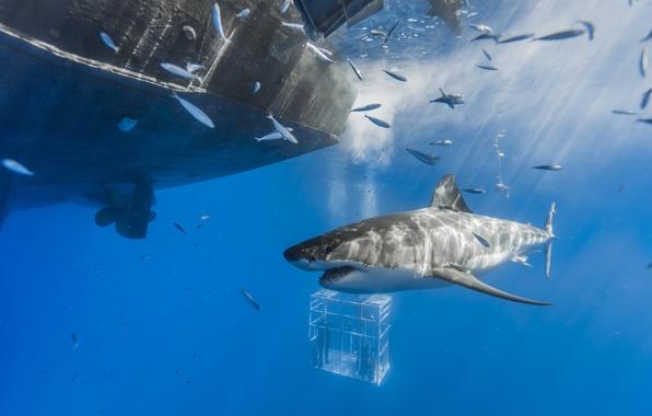 Picture sea, ship, shark