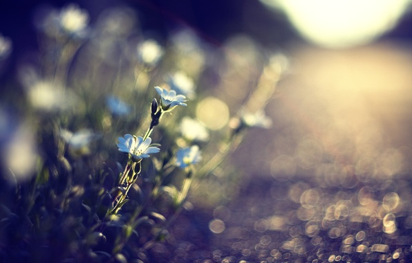 Picture road, grass, the sun, macro, light, flowers, nature, glare, stones, earth, plants, blur, blue, track