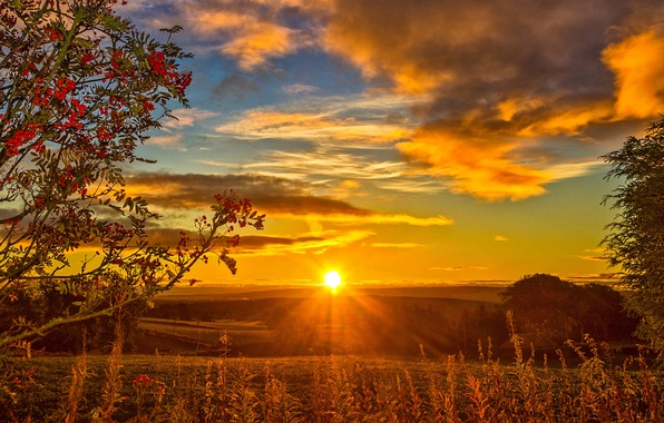 Picture the sky, grass, clouds, sunset, Scotland, the rays of the sun, Rowan, autumn.field