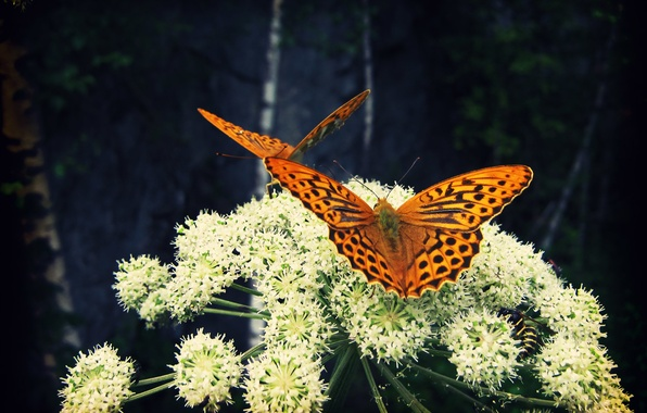 Photo wallpaper nature, flower, insects, butterfly, Larisa Koshkina