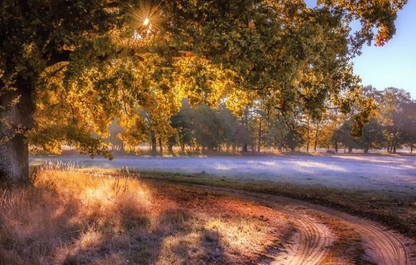 Picture road, field, autumn, fog, tree