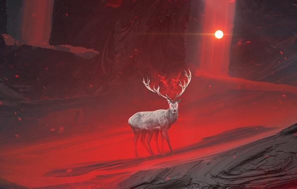 Picture look, the sun, light, darkness, deer, horns