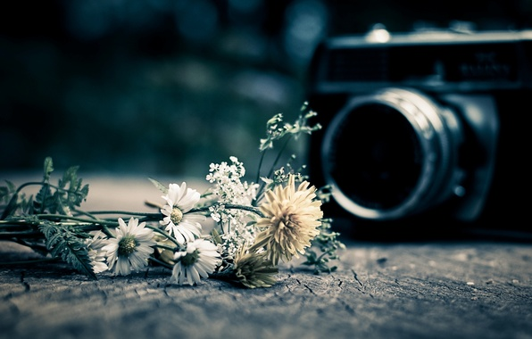 Picture flowers, background, widescreen, Wallpaper, mood, camera, the camera, wallpaper, flowers, flower, widescreen, camera, background, full …