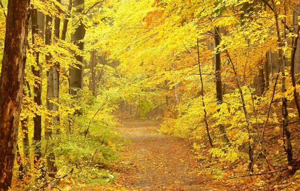 Picture road, autumn, trees, crown, yellow