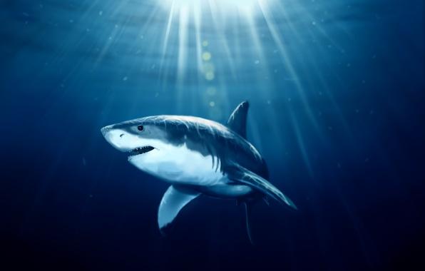 Picture sea, fish, shark, art, under water, sunlight