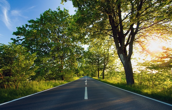 Picture road, the sun, trees, green
