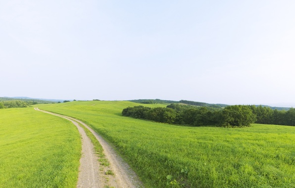 Picture greens, beauty, dal, Road, horizon