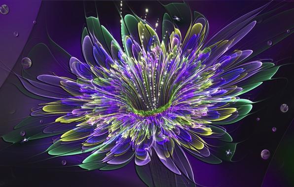 Picture flower, light, Wallpaper, petals, the volume