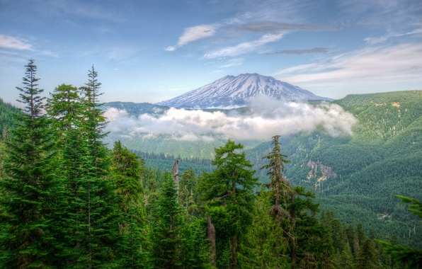 Picture USA, forests, Washington, Mountains, nature.