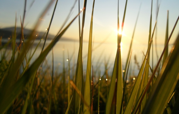 Picture greens, grass, the sun, rays, happiness, freshness, lake, Rosa, heat, dawn, Baikal