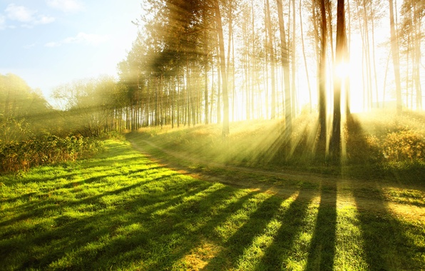 Picture forest, summer, grass, the sun, rays, light, trees, nature, heat, tree, mood, spring, grass, forest, ...