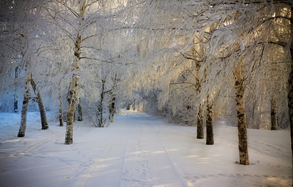 Picture winter, road, forest, the sky, snow, trees, landscape, nature, white, forest, road, sky, trees, nature, …