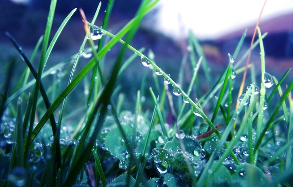 Picture greens, grass, drops, macro, nature, Rosa, rain, plants