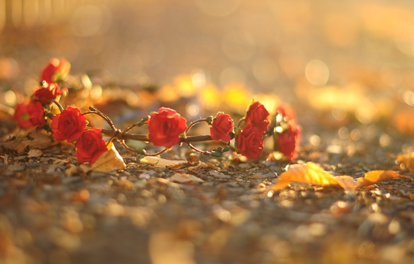 Picture asphalt, leaves, macro, flowers, red, background, earth, widescreen, Wallpaper, roses, wallpaper, flowers, wreath, flower, widescreen, …