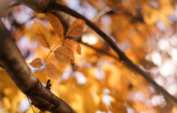 Picture leaves, the sun, macro, trees, yellow, background, tree, widescreen, Wallpaper, blur, branch, leaf, wallpaper, leaf, …