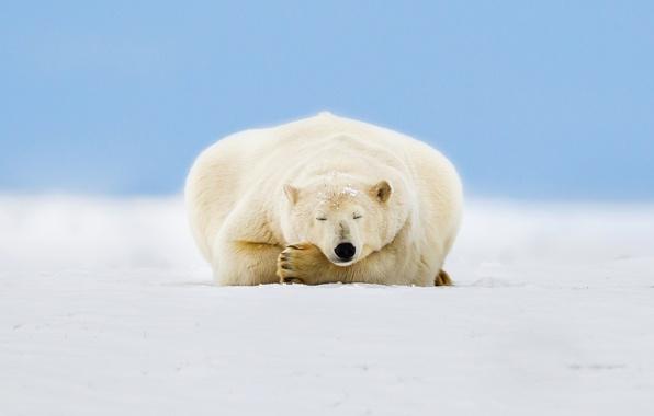 Picture ice, the sky, snow, Alaska, polar bear, Beaufort Sea, Arctic National Wildlife Refuge