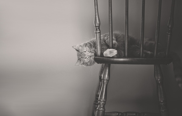 Picture cat, cat, black and white, chair, monochrome