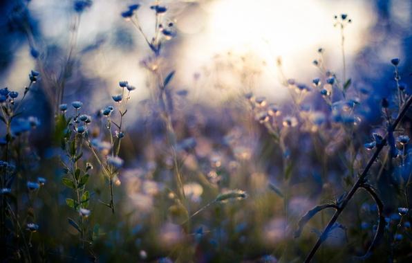Picture macro, light, light, macro, wildflowers, wildflowers