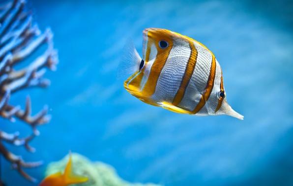 Picture aquarium, fish, corals