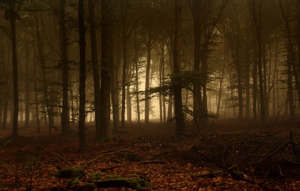 Picture Fog, Trees, Forest, Leaves, Branches, Moss