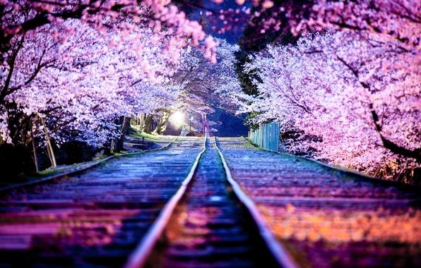 Picture night, the city, lights, spring, Japan, Sakura, April, Kyoto