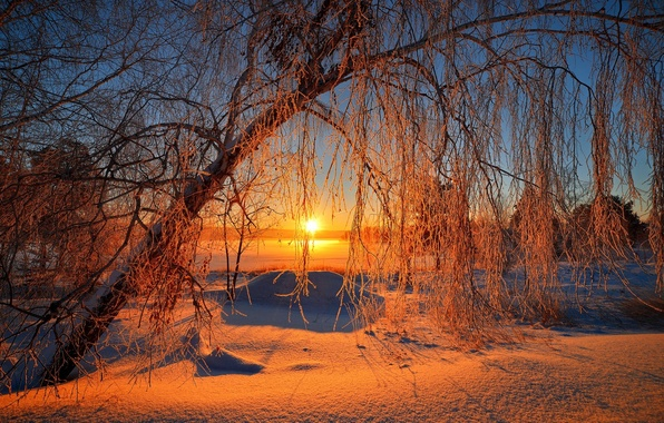 Picture winter, the sky, the sun, snow, trees, landscape, nature, sunrise