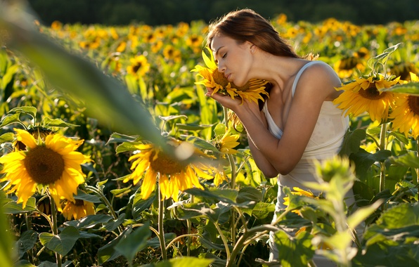 Picture field, girl, sunflowers