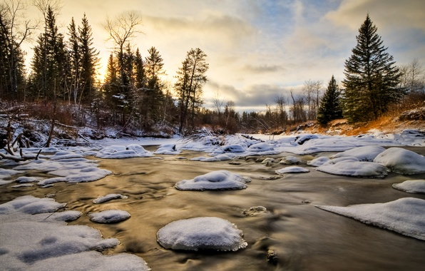 Picture ice, winter, forest, water, snow, trees