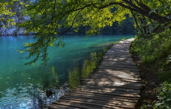 Picture summer, water, tree, track, Croatia, Plitvice lakes, Luggage