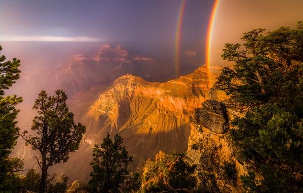 Picture light, trees, rocks, rainbow, canyon, USA